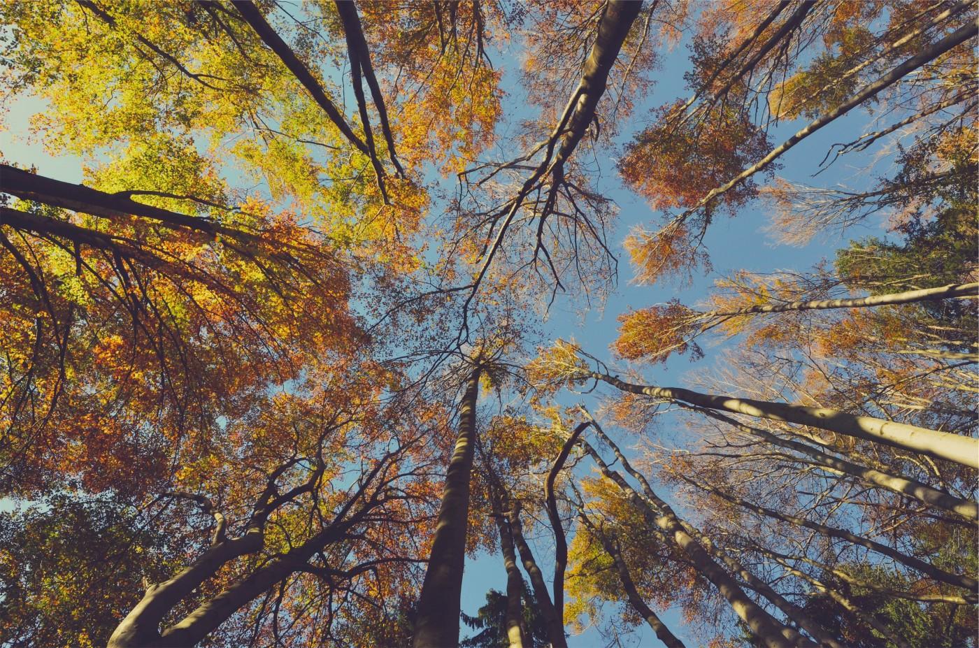 podas aema en otoño