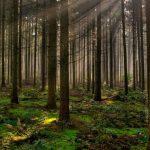 HIDROSIEMBRA Y PLANTACIONES